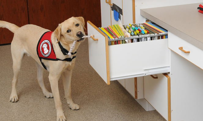 Hearing and Service Dogs of Minnesota joined forces with another organization.