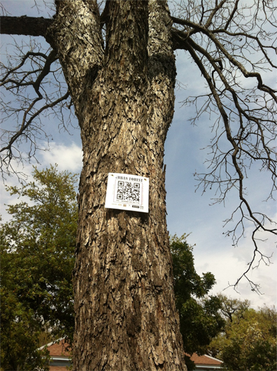 QR code in a tree